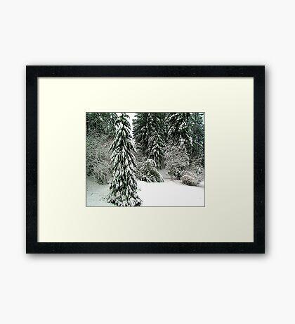 From the Back Door Framed Print