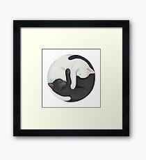 Yin Yang Balancing Cats Framed Print