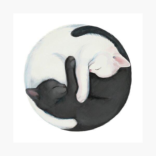 Gatos de equilibrio de Yin Yang Lámina fotográfica