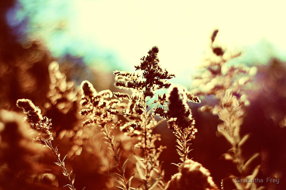 Summers End by Samantha  Frey