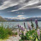 Lake Wanaka Lupins by Larry Davis