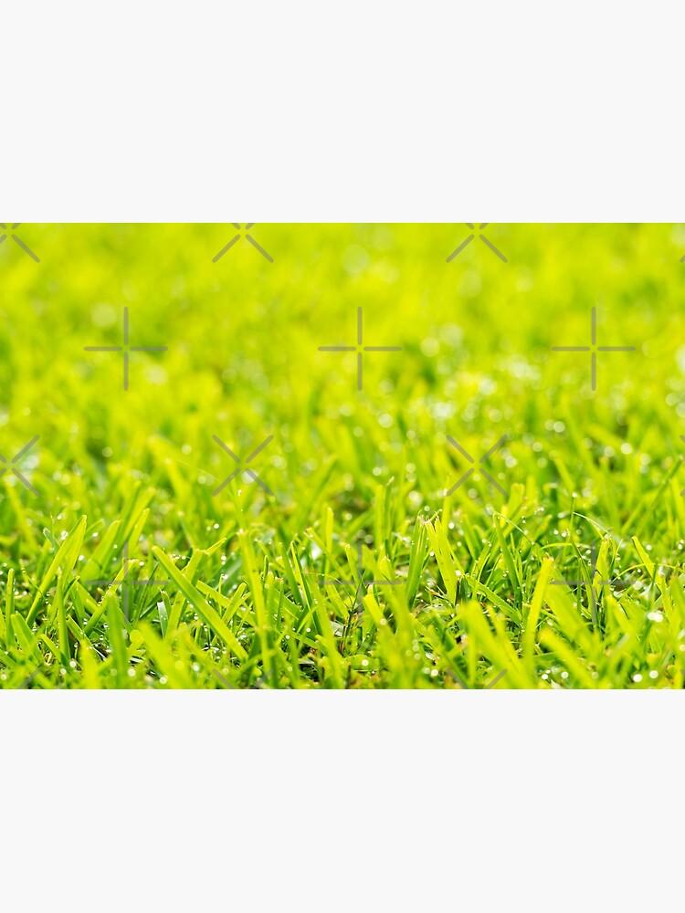 Grass Dew Drops by THPStock