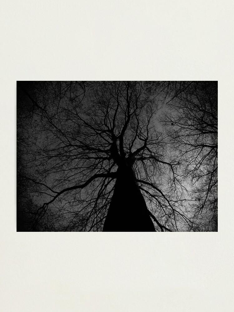 Alternate view of Tree Photographic Print