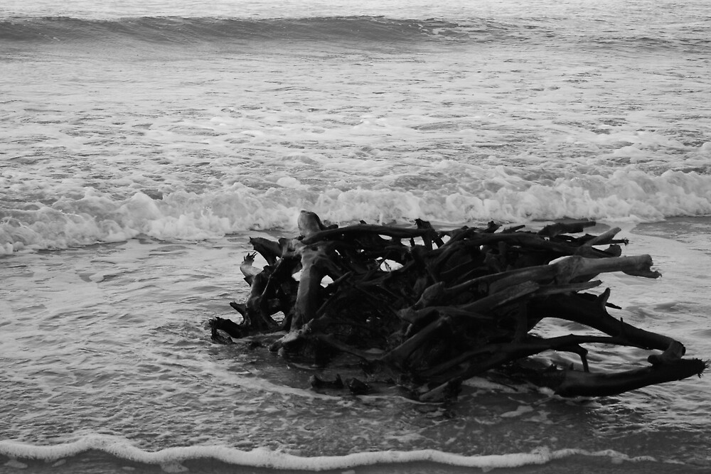 Driftwood 2 by Jenn  Dixon