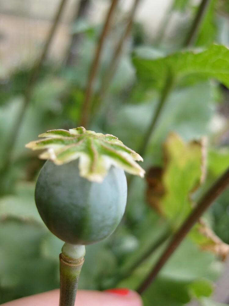 Opium by Emma Breen