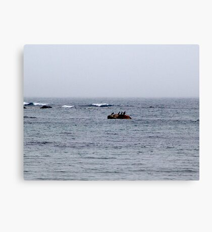 Just Too Foggy to Fly Canvas Print