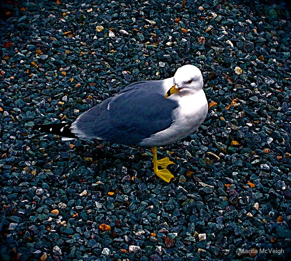 Seagull by Marita McVeigh