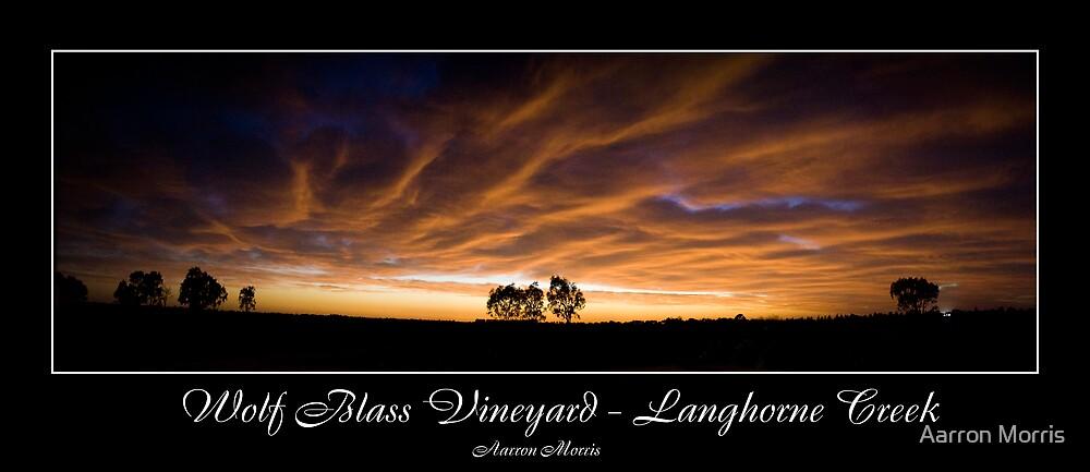 Vineyard Lights by Aarron Morris