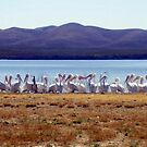 Pelicans At Lake Balmorhea by R&PChristianDesign &Photography