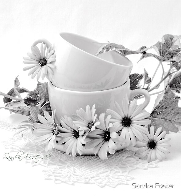 Osteospernum Daisy Flowers Still Life by Sandra Foster