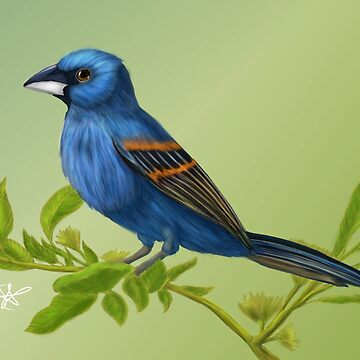 Blue Grosbeak by Jakathine