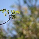 Branch by Eric Schneider