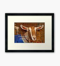 I'm not a kid any more: goat Framed Print