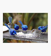 Bluey,s restaurant. Photographic Print