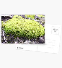 Moss of Tammin Postcards