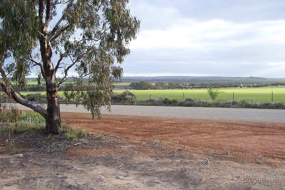 Road of the Wheatbelt by GuavaBeans
