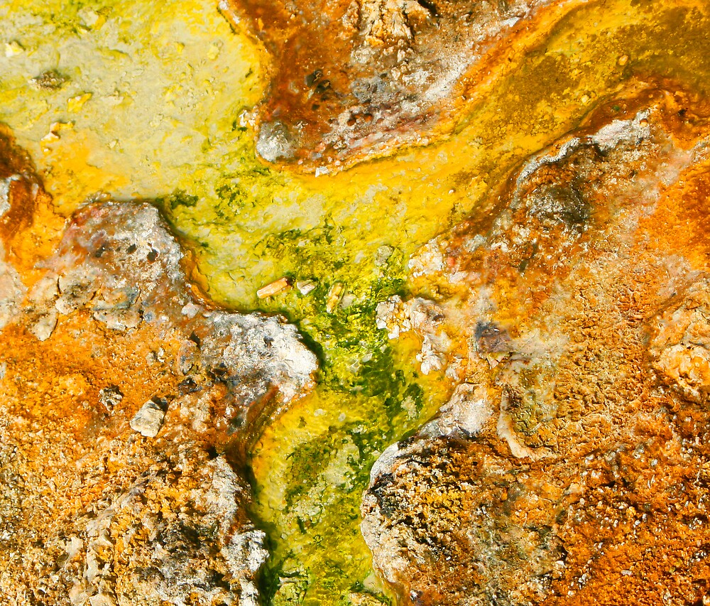 Geyser Basin Detail by Virginia Maguire