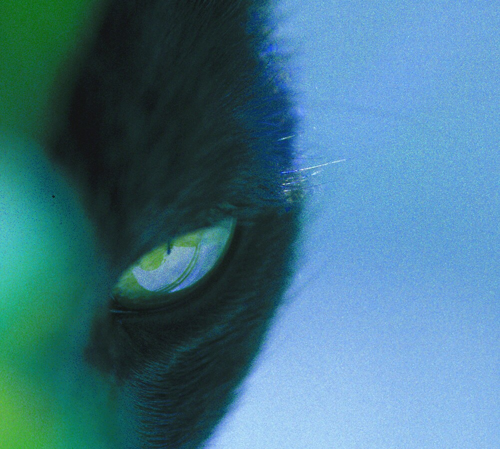 Cat's Eye by Virginia Maguire