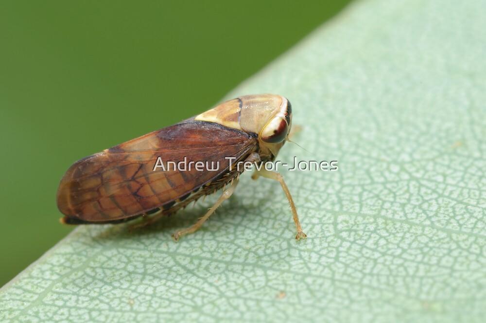 Yellow-headed Leafhopper by Andrew Trevor-Jones