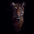 Tigris by M.A by Beechhousemedia