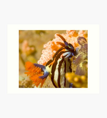 Nembrotha Purpureolineolate Nudibranch Art Print