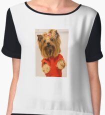 Cute Yorkie in Red by Yana Reint Chiffon Top