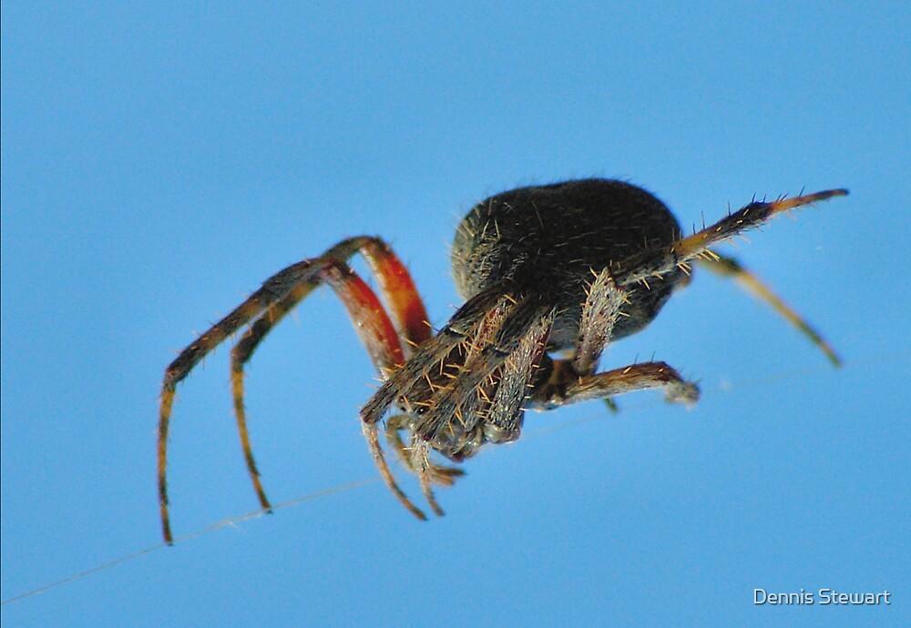 Spider on a wire by Dennis Stewart
