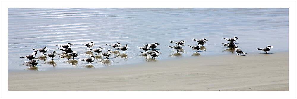 The Birds by Des Berwick