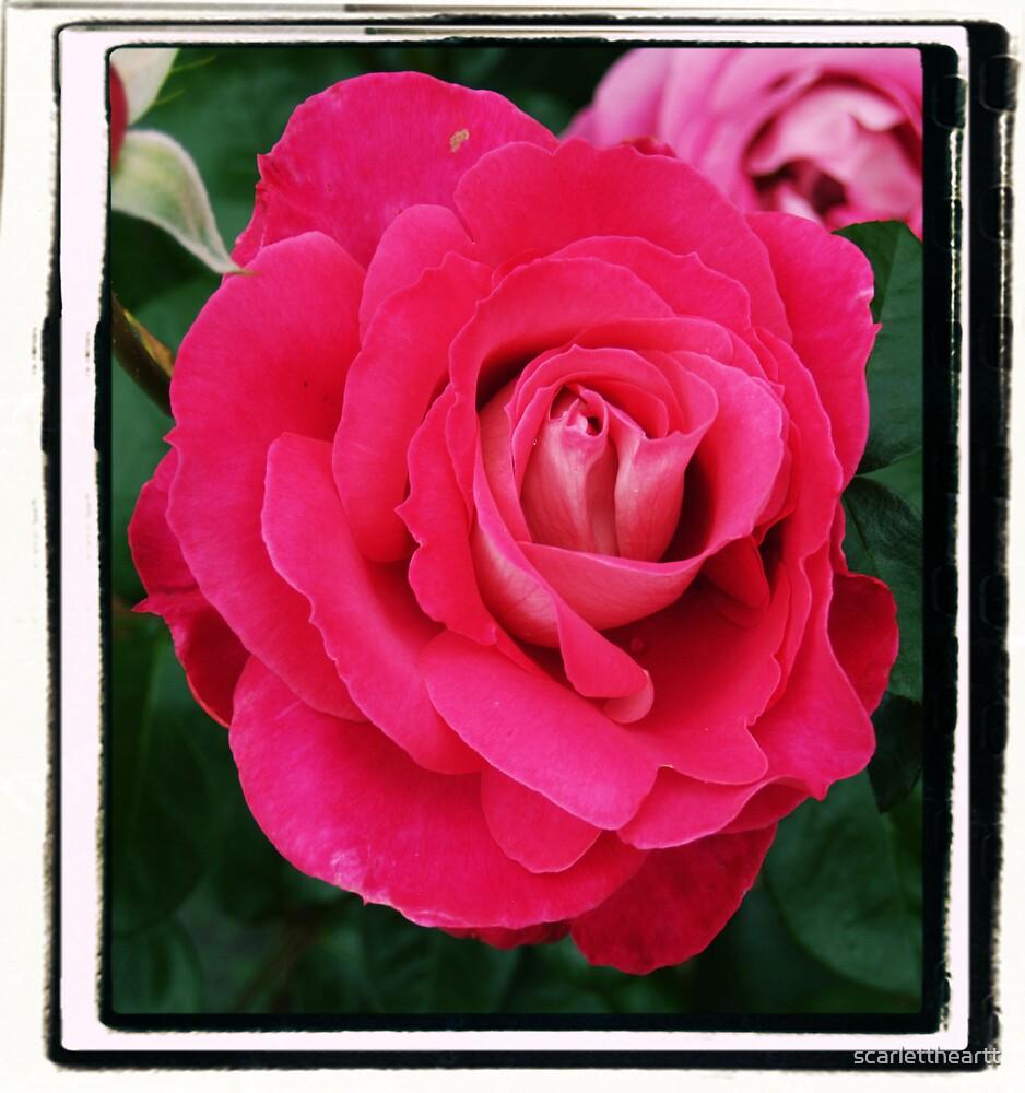 passion petals by scarlettheartt