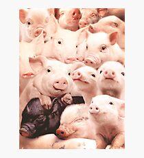 Pigs Photographic Print