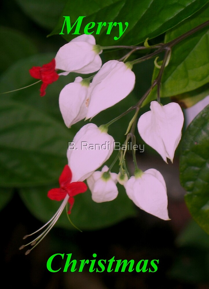 Flowery holiday greeting by ♥⊱ B. Randi Bailey