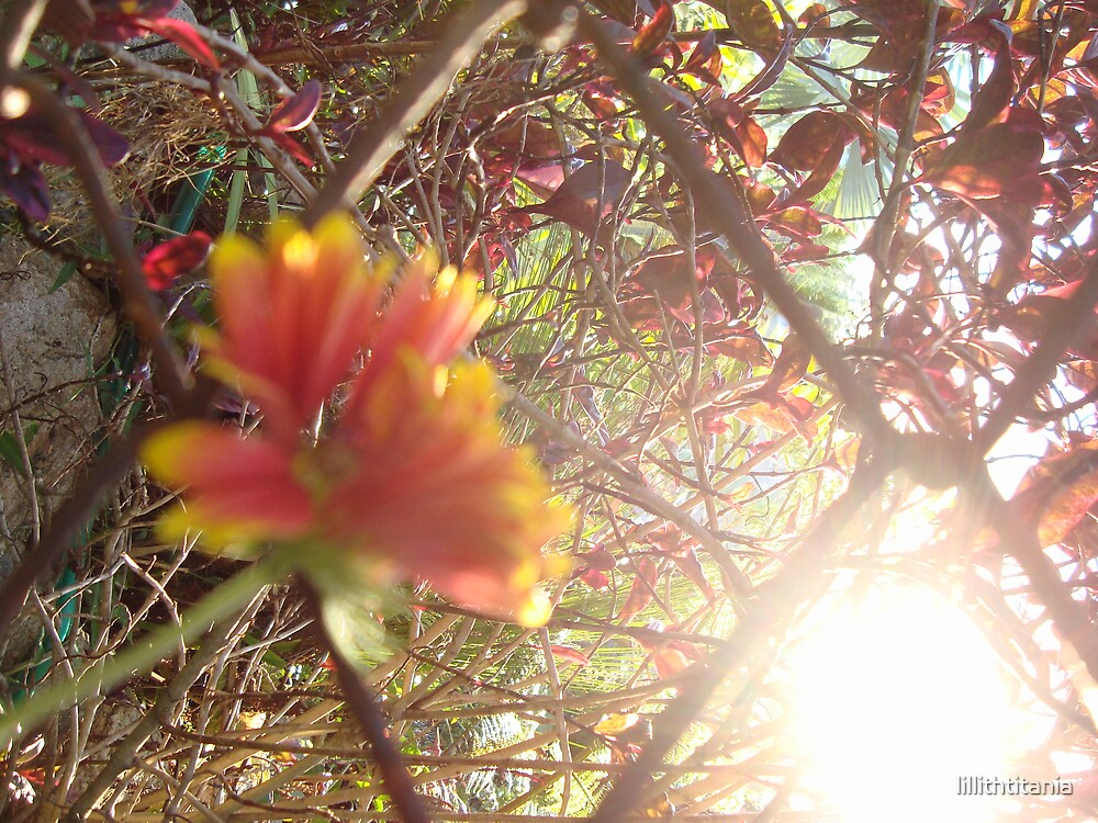 Sun over Flowers by lillithtitania