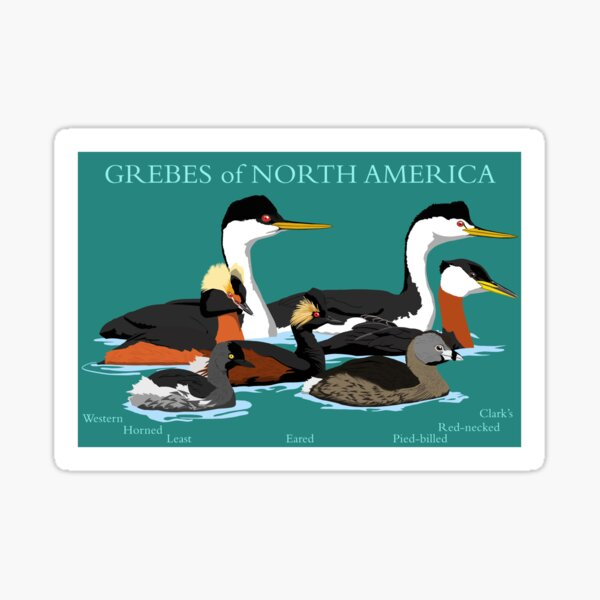 Grebes of North America (with text) Sticker