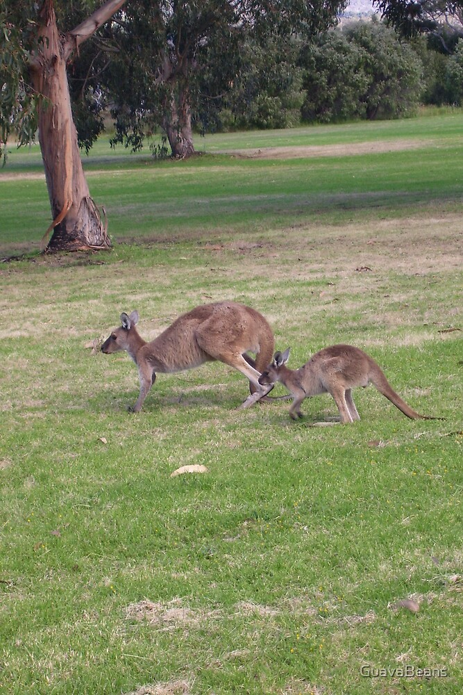 Roos on the Green 2 by GuavaBeans