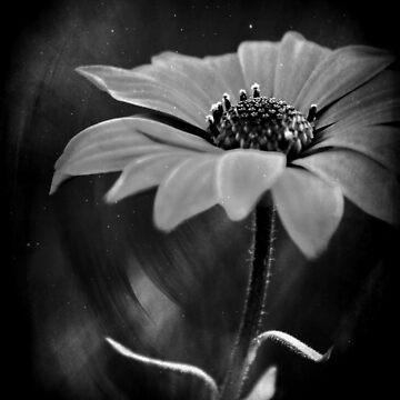 ... Beauty! by RoxysArtShop