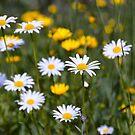 Meadow Flowers by Kasia-D