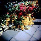 Flower Power by Leanne Smith