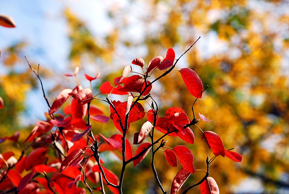 Colours of Autumn by jack8