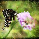 Swallowtail Dreams by Jonicool