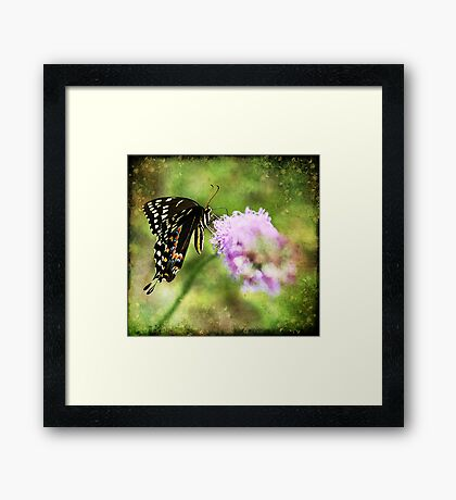 Swallowtail Dreams Framed Print