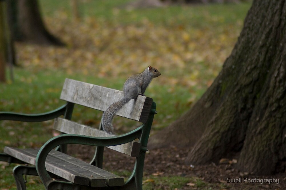 Park bench squirrel by Swell Photography