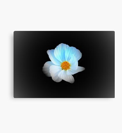White and Blue Flower Canvas Print