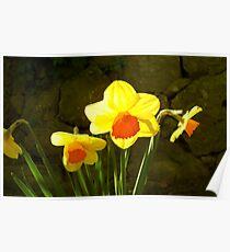 Bright daffodils ! Poster