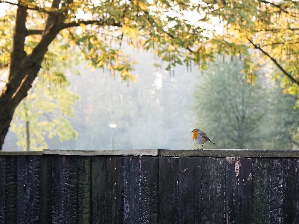 little bird by tataleka