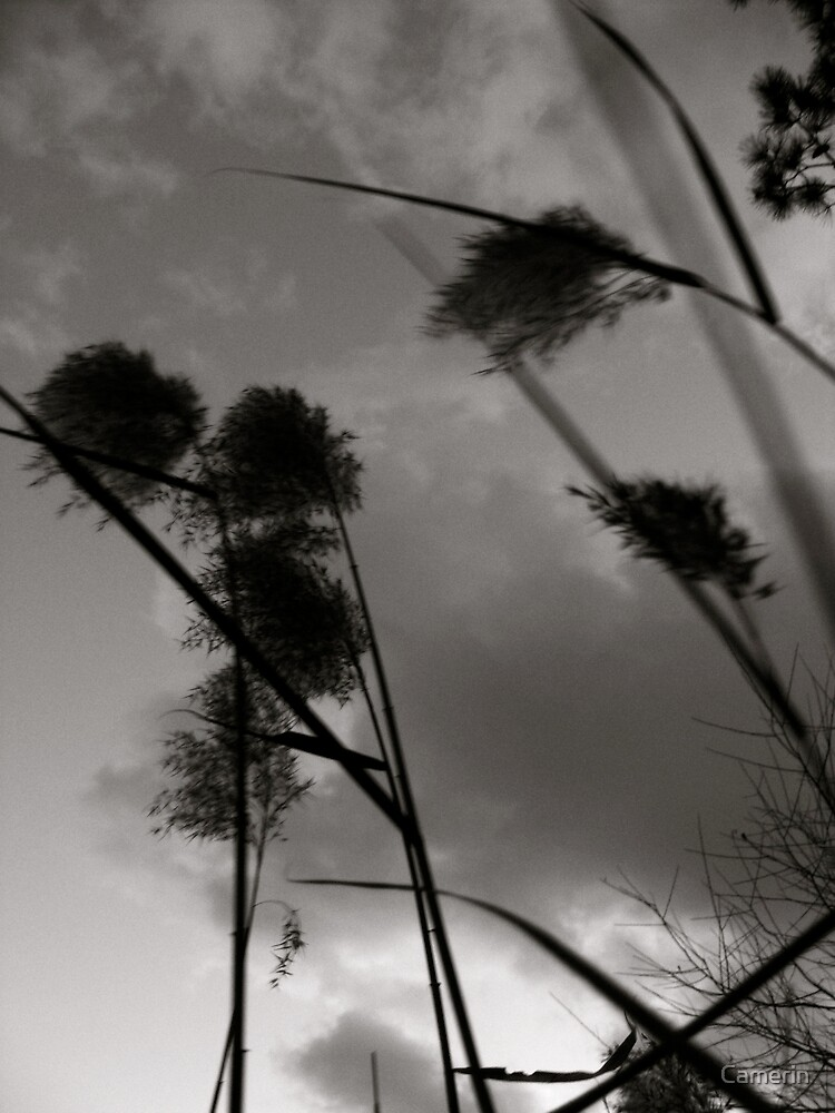 THE WINTER WIND  by Camerin