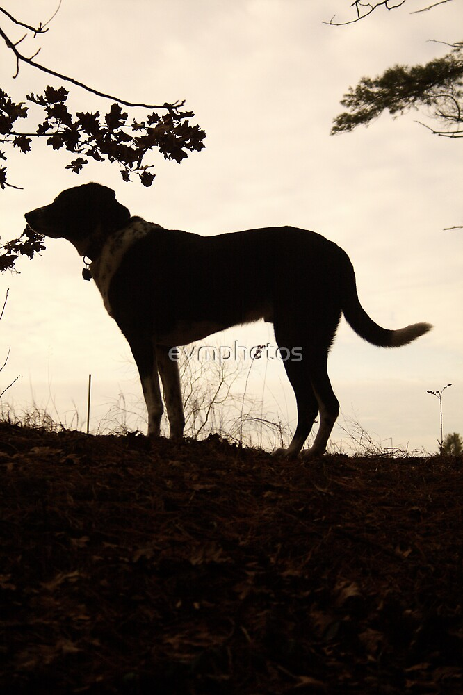 Dog Silhouette by evmphotos