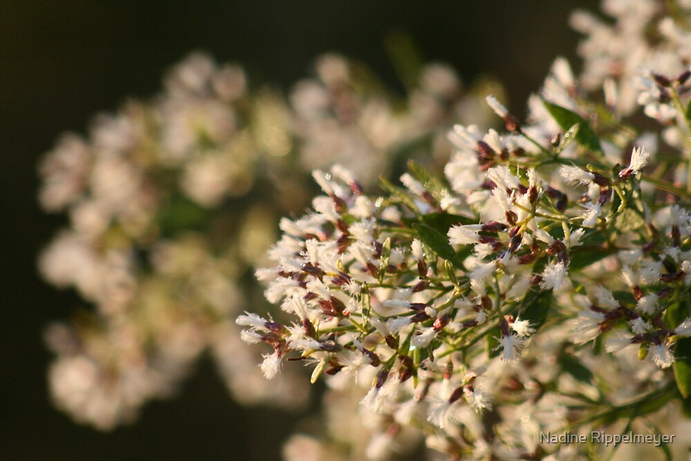 White Flowers by Nadine Rippelmeyer