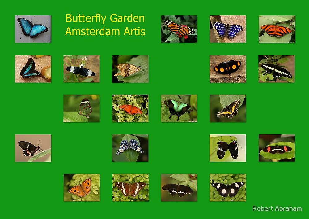 Butterflies Of The World by Robert Abraham