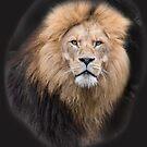 Closeup Portrait of a Male Lion by YLArt