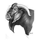 Boer Buck Headstudy by Patricia Howitt